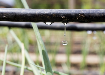 SUSTAINABLE FERTIGATION – NOT JUST FOR ORGANIC FARMERS